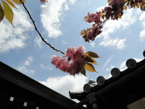 Sakura_4